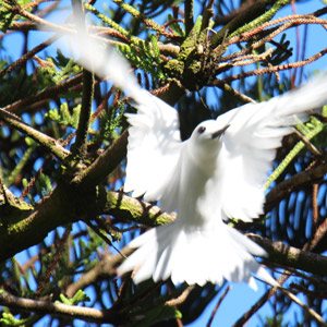 Lord Howe Island Bird Watching
